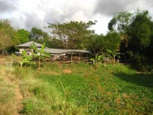 1306319297_67287707_4-FARM-217-Hectares-in-STA-MARIA-BULACAN-Real-Estate