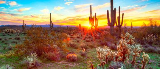 featured-image-sun-is-setting-between-saguaros-in-sonoran-desert